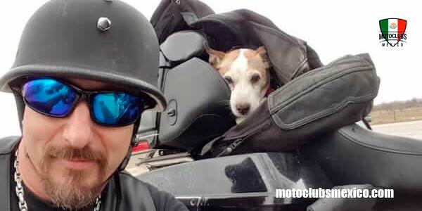 El Dueño Tiró A Su Perro Del Coche Pero Mira Lo Que Hizo Este Motociclista